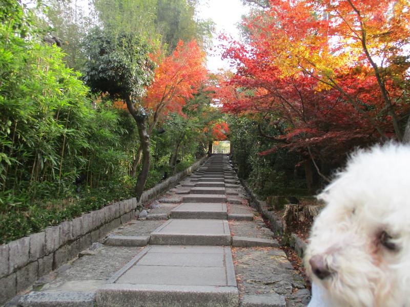 高台寺へ向かう階段坂の紅葉