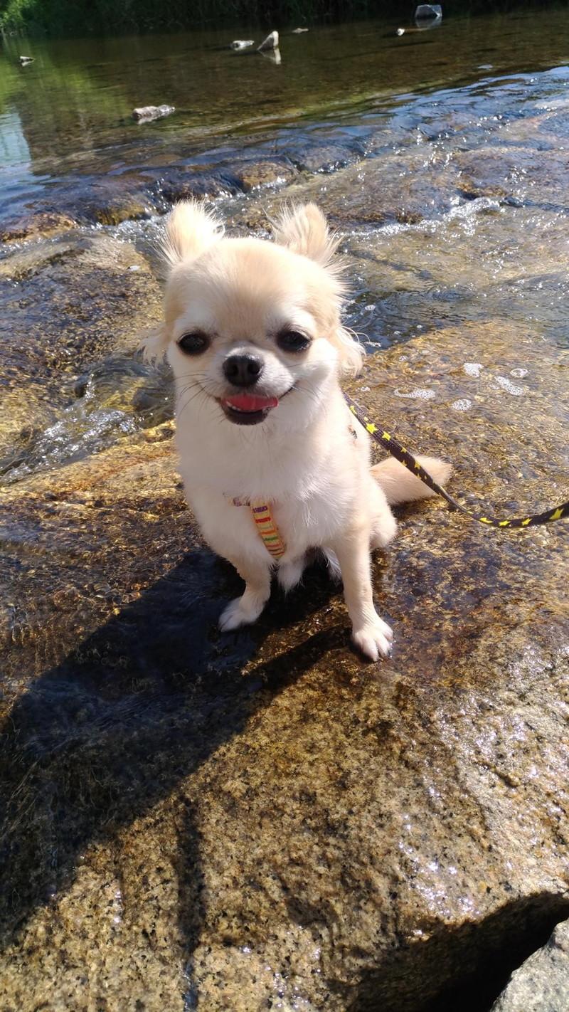 お気に入りの飛び石の上の愛犬