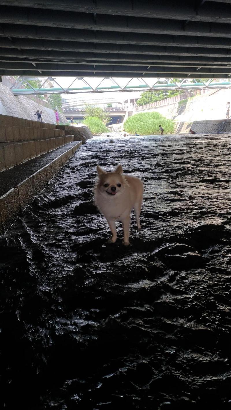 暑い夏も住吉川のおかげで涼しい