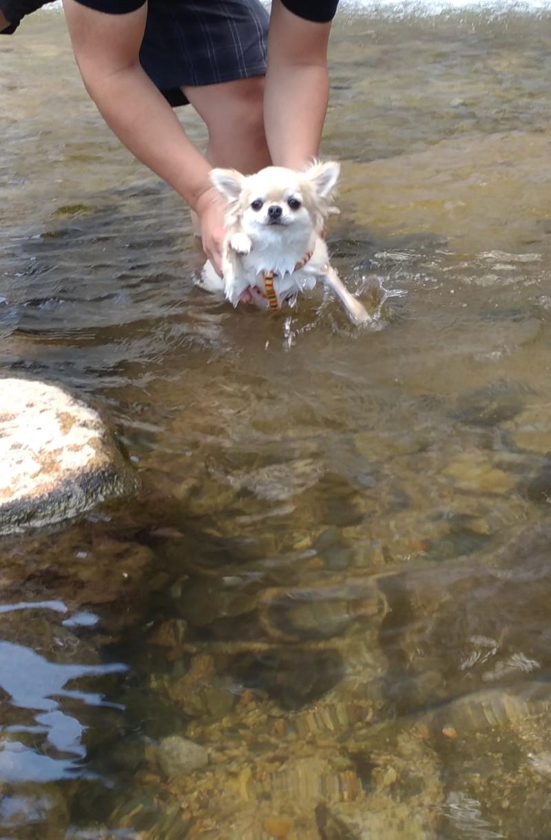 泳ぎの猛特訓中の愛犬