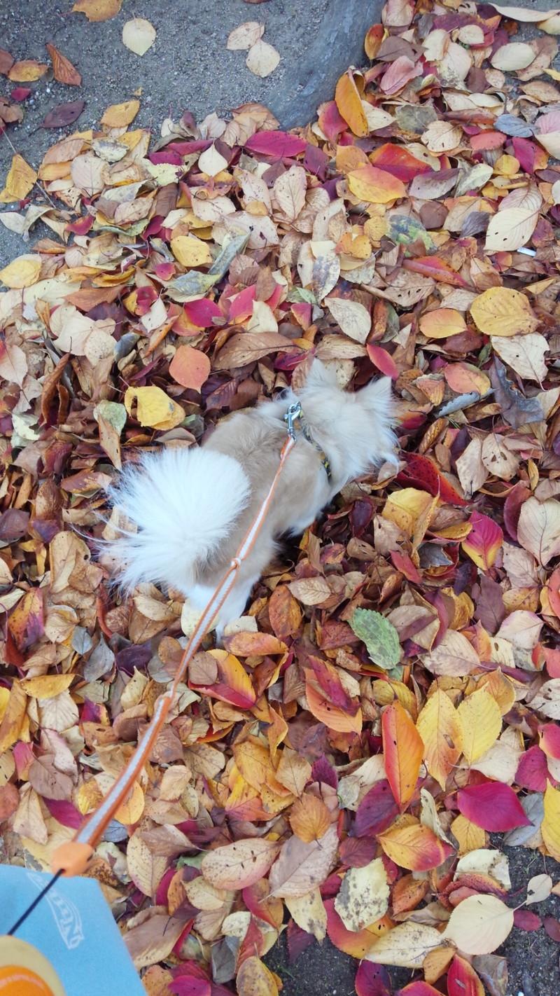 色鮮やかな落ち葉の上で