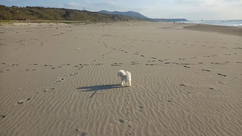 伊良湖海岸での愛犬