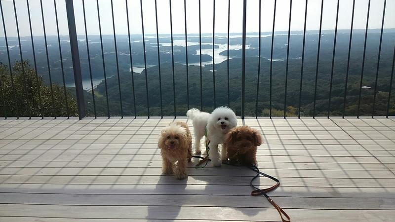 愛犬と天空テラスからの眺め