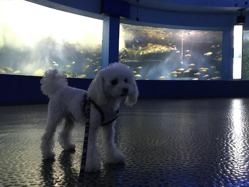 パノラマ水槽と愛犬