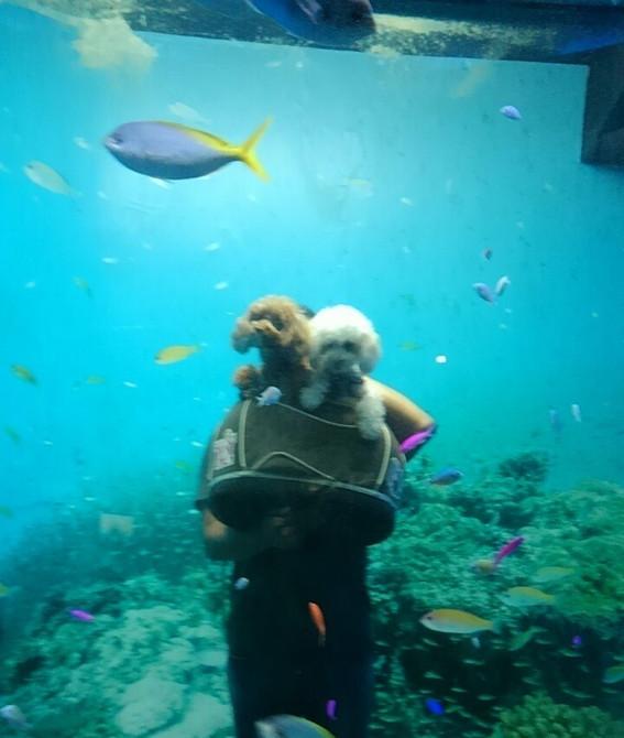 熱帯魚と愛犬