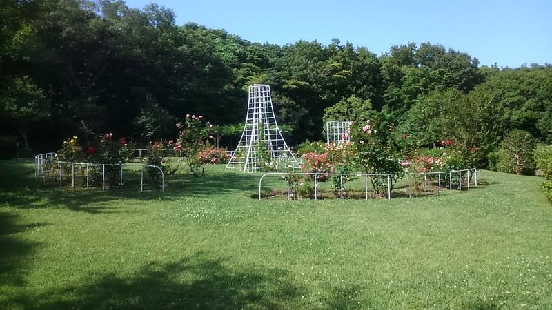 大庭城址公園内のバラ園
