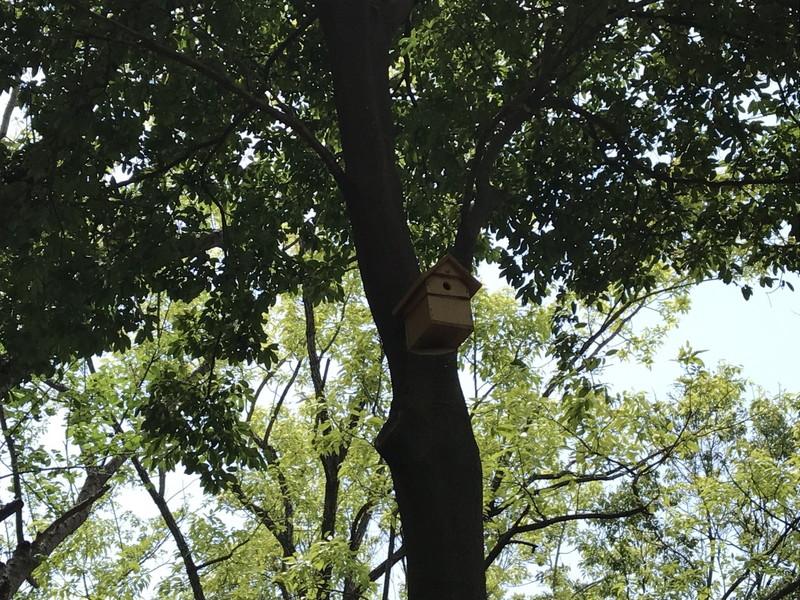 木にかけられた巣箱