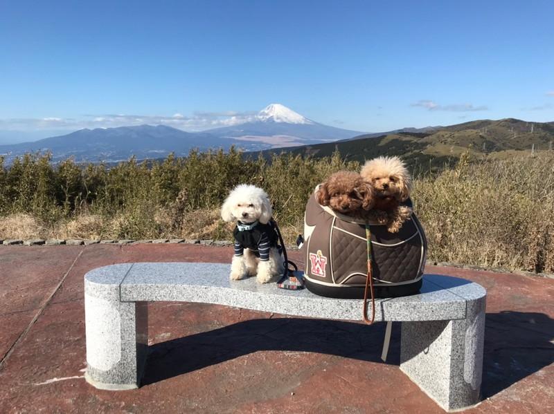 ケーブルカー山頂駅:富士山と愛犬