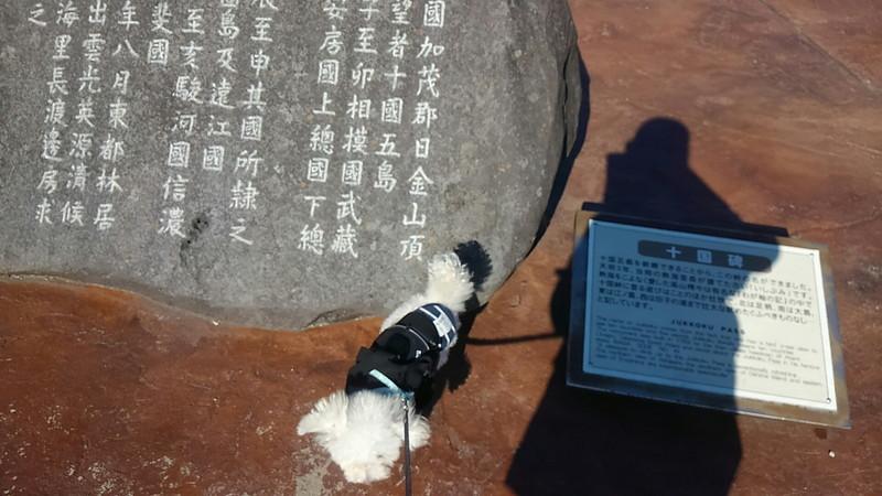 十国峠山頂:十国碑と愛犬