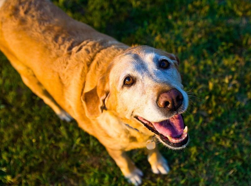 シニア犬用のおすすめのおもちゃ 老犬も楽しめる安全なおもちゃ8選